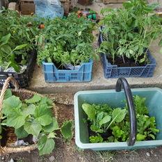 Préparation à la plantation du jardin